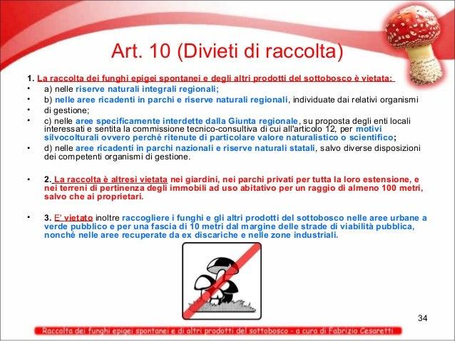 Art. 10 (Divieti di raccolta) 1. La raccolta dei funghi epigei spontanei e degli altri prodotti del sottobosco è vietata: ...