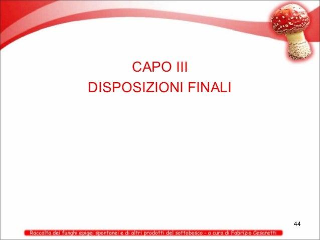 CAPO III DISPOSIZIONI FINALI  44