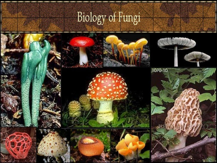Introduction of FungiThey are classified as eukaryotes,Fungi can be divided into two basic morphological forms,yeasts and ...