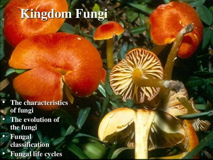 Kingdom Fungi• The characteristics    of fungi•   The evolution of    the fungi•   Fungal    classification•   Fungal life...