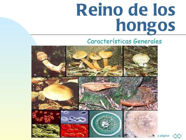 Reino de los hongos Características Generales