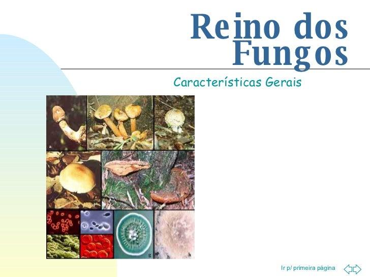 Reino dos Fungos Características Gerais