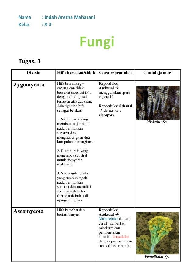 Nama : Indah Aretha MaharaniKelas : X-3FungiTugas. 1Divisio Hifa bersekat/tidak Cara reproduksi Contoh jamurZygomycota Hif...
