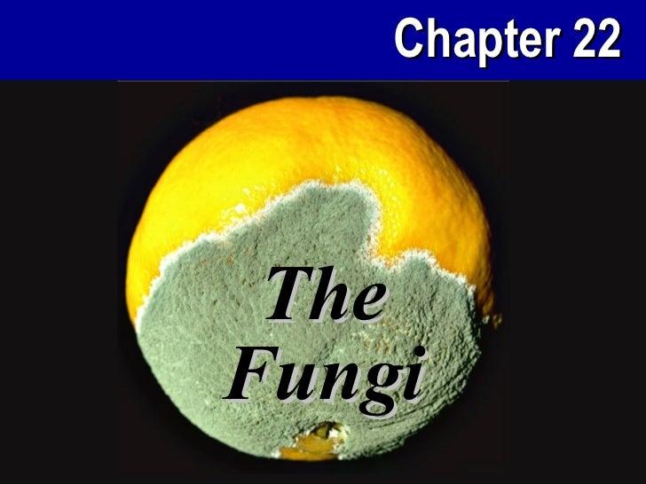Chapter 22 TheFungi