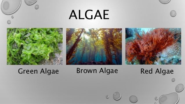 Fungi and protist