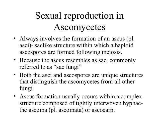 Ascomycota sexual reproductive structures
