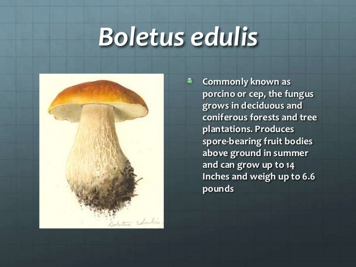 Fungi Example Organisms on Color Number Fruit