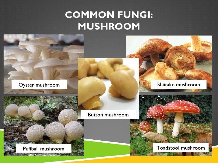 Fungi Final