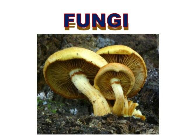 Monera Protist Plant AnimalFungi Fungi form a Kingdom on their own Fungi are: eukaryotic