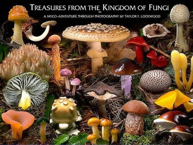 What are the characteristics ofWhat are the characteristics of Fungi?Fungi? Most Multicellular (except yeast) Eukaryotes –...
