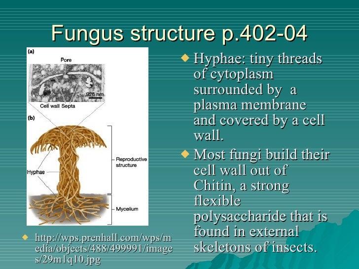 Fungi Project 1