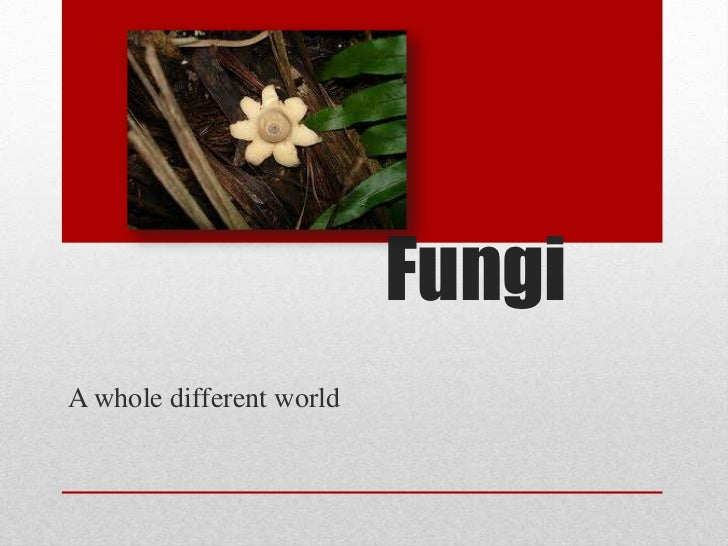 FungiA whole different world
