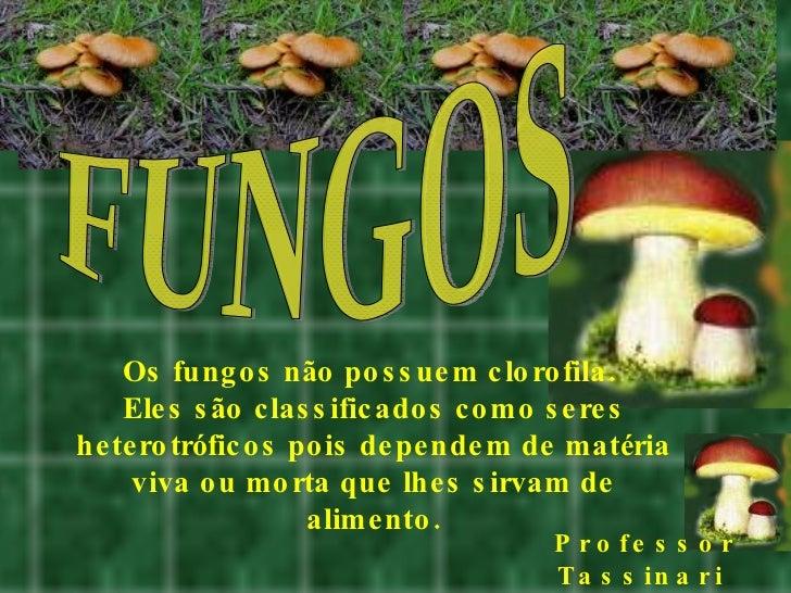FUNGOS Os fungos não possuem clorofila.  Eles são classificados como seres heterotróficos pois dependem de matéria viva ou...