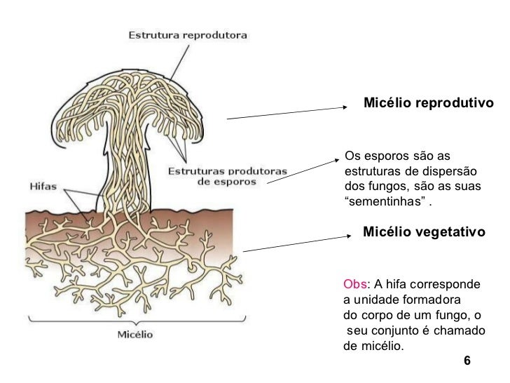 O fungo de um modo feminino como tratar que drogas