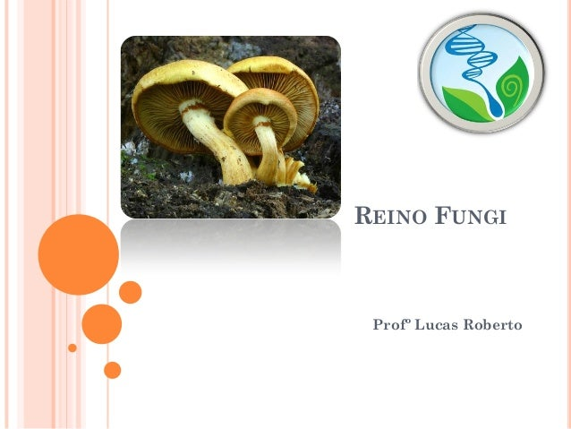 REINO FUNGI Profº Lucas Roberto