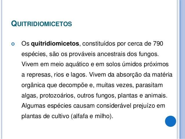 ASCOMICETOS  Os ascomicetos, com cerca de 32.000 espécies, são os que formam estruturas reprodutivas sexuadas, conhecidas...