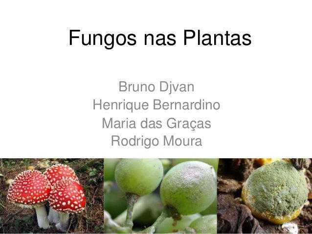 Fungos nas Plantas Bruno Djvan Henrique Bernardino Maria das Graças Rodrigo Moura