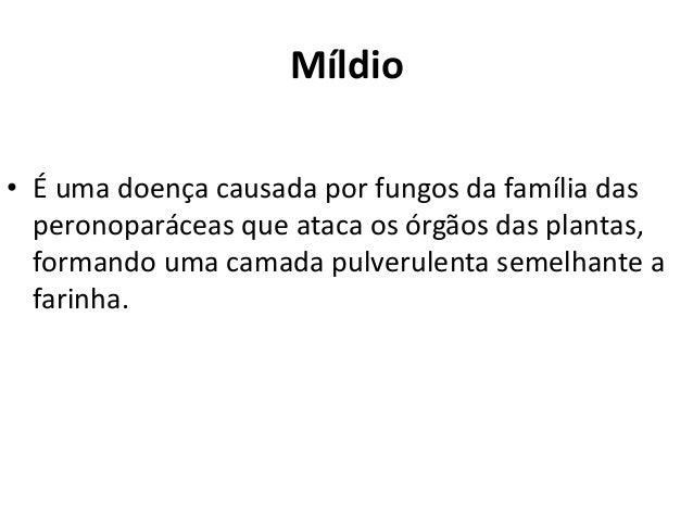 Míldio • É uma doença causada por fungos da família das peronoparáceas que ataca os órgãos das plantas, formando uma camad...