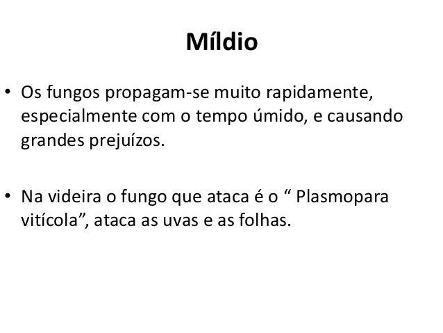 Míldio • Os fungos propagam-se muito rapidamente, especialmente com o tempo úmido, e causando grandes prejuízos. • Na vide...