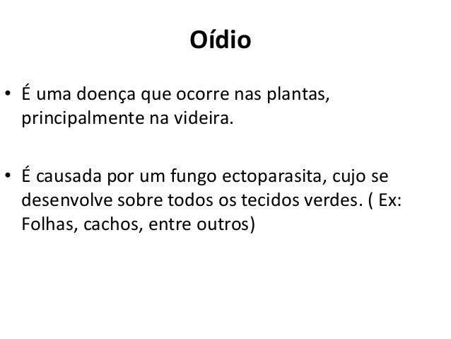 Oídio • É uma doença que ocorre nas plantas, principalmente na videira. • É causada por um fungo ectoparasita, cujo se des...