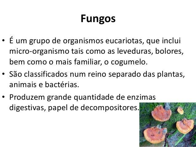 Fungos • É um grupo de organismos eucariotas, que inclui micro-organismo tais como as leveduras, bolores, bem como o mais ...