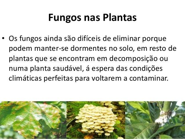 Fungos nas Plantas • Os fungos ainda são difíceis de eliminar porque podem manter-se dormentes no solo, em resto de planta...