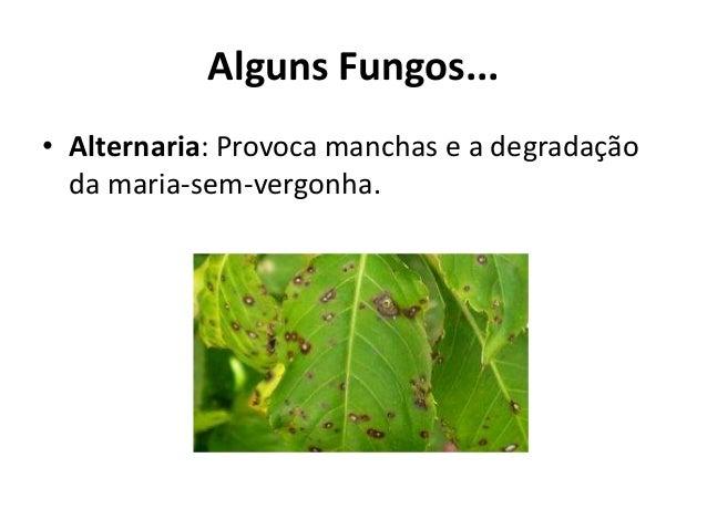 Alguns Fungos... • Alternaria: Provoca manchas e a degradação da maria-sem-vergonha.