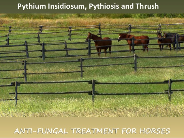 ANTI-FUNGAL TREATMENT FOR HORSES Pythium Insidiosum, Pythiosis and Thrush