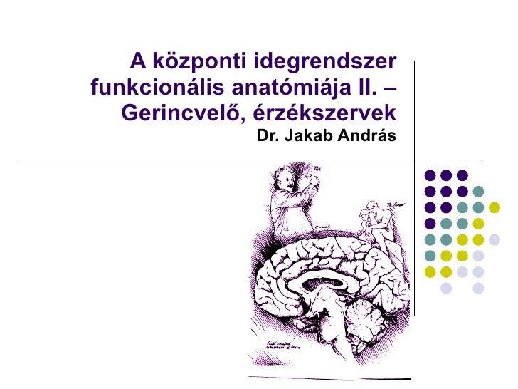 A központi idegrendszer funkcionális anatómiája II. – Gerincvelő, érzékszervek  Dr. Jakab András