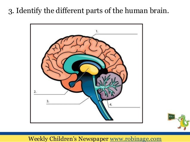 Fun Learning For Kids : Human Anatomy
