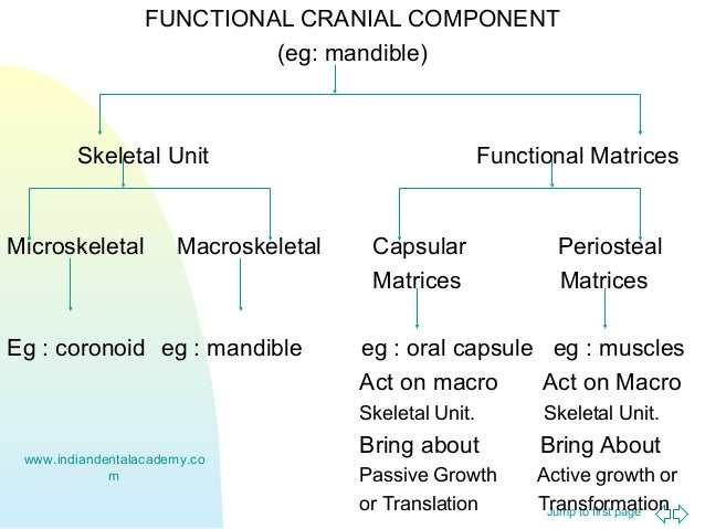 the functional to matrix transition Functional vs divisional structure product vs functional management it is important to comprehend the role and difference of a functional leadership and product leadership, the role of project and program management within the framework of organization structure.