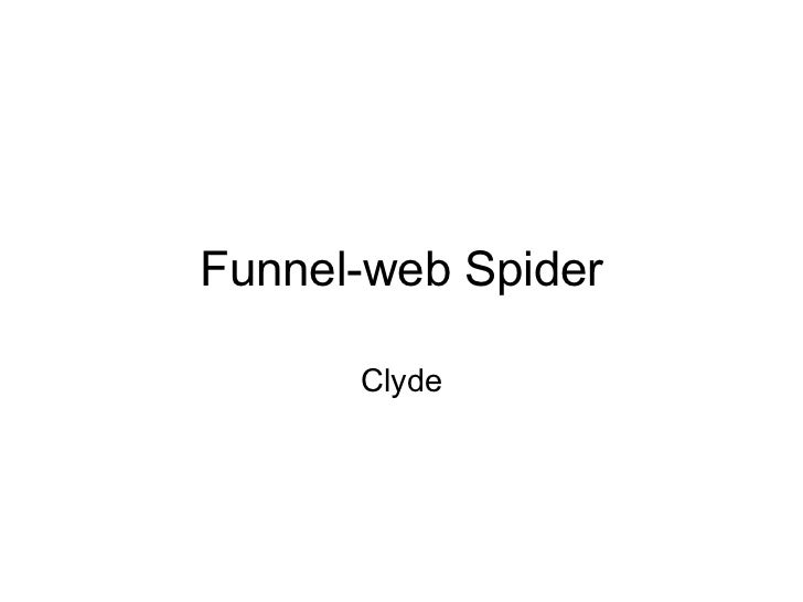 Funnel-web Spider Clyde