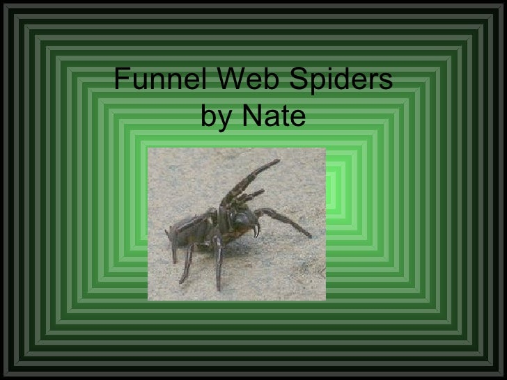 Funnel Web Spiders by Nate