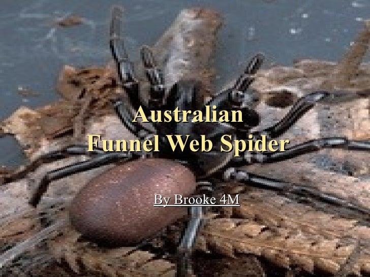 Australian Funnel Web Spider By Brooke 4M