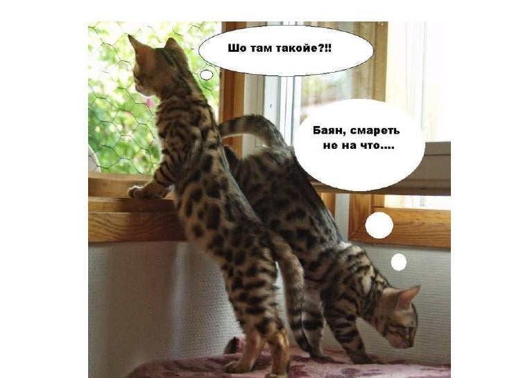 Funny cats Slide 2
