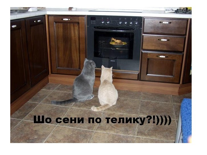 Funny cats Slide 3