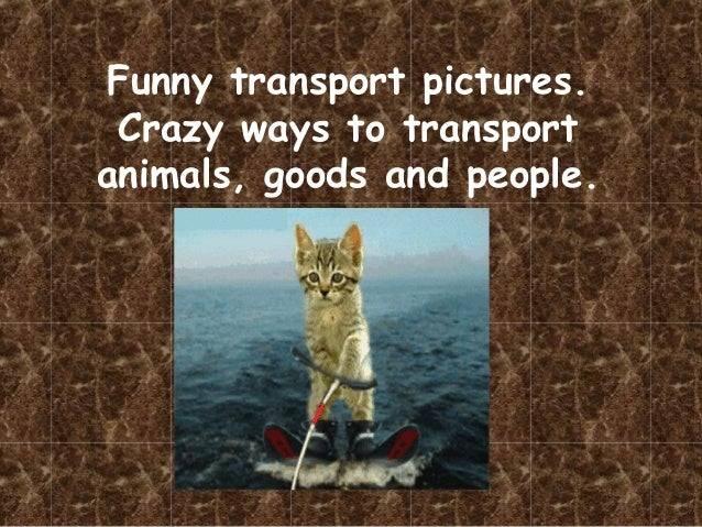 Funny transport pictures. Crazy ways to transport animals, goods and people.