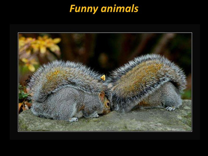 Funny animals<br />