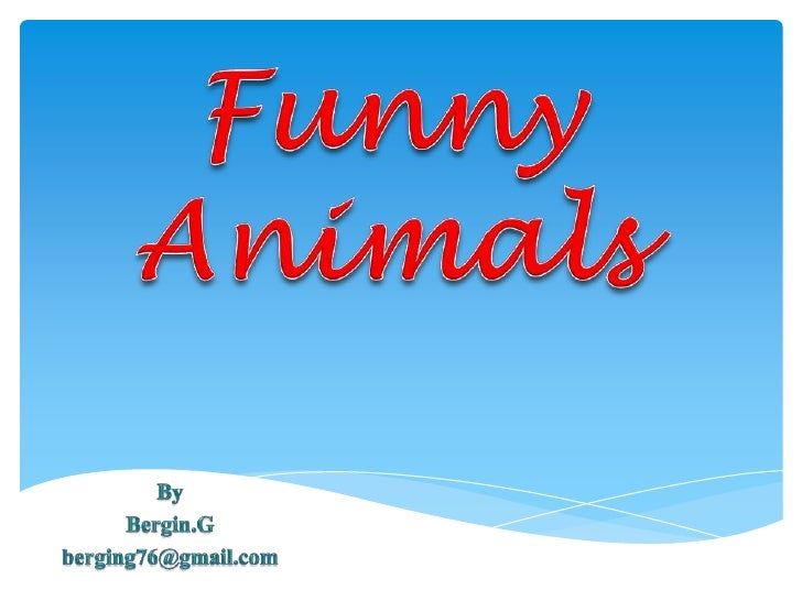 Funny Animals<br />By <br />Bergin.G<br />berging76@gmail.com<br />