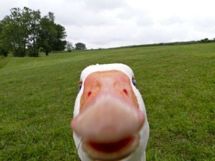 Funny Meme Hi : Funny animals