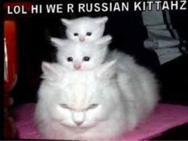 Image of: Animals Slideshare Funny Cat Videos On Youtube