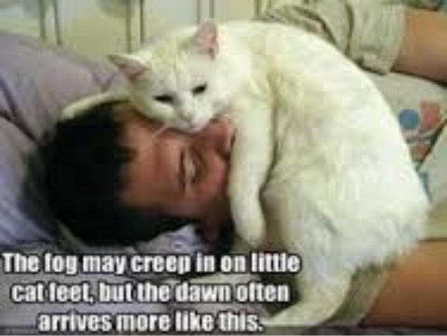 Image of: Tweets Slideshare Funny Cat Videos Youtube 2012