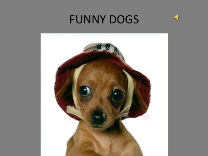 FUNNY DOGS<br />