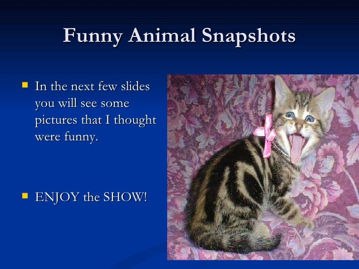 Funny Animal Snapshots <ul><li>In the next few slides you will see some pictures that I thought were funny. </li></ul><ul>...