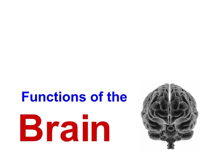 functions of the brain