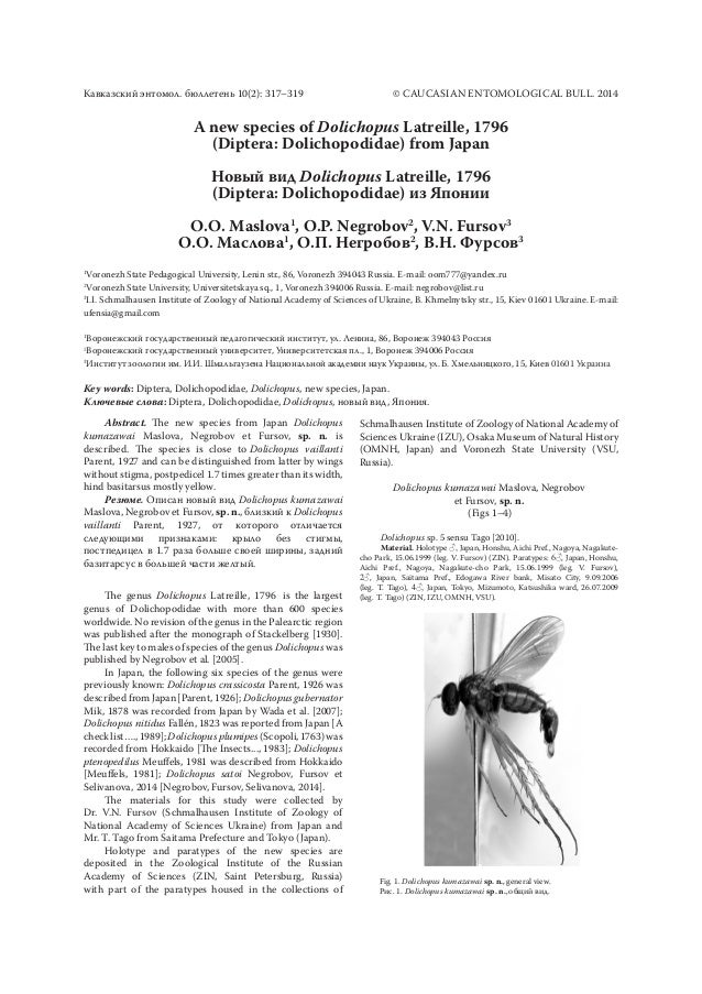 A new species of Dolichopus Latreille,1796 (Diptera: Dolichopodidae) fromJapan Новый вид Dolichopus Latreille,1796 (Dip...
