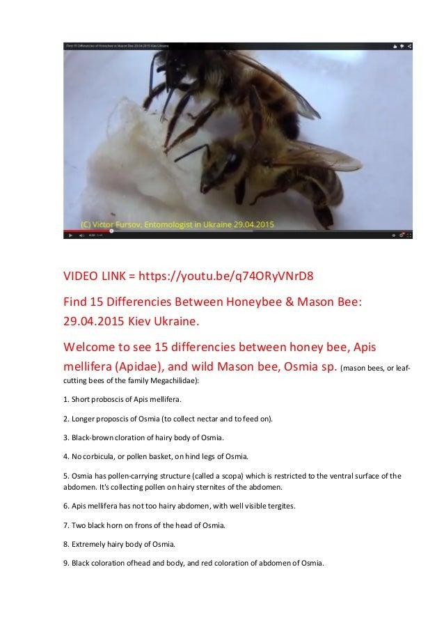 VIDEO LINK = https://youtu.be/q74ORyVNrD8 Find 15 Differencies Between Honeybee & Mason Bee: 29.04.2015 Kiev Ukraine. Welc...