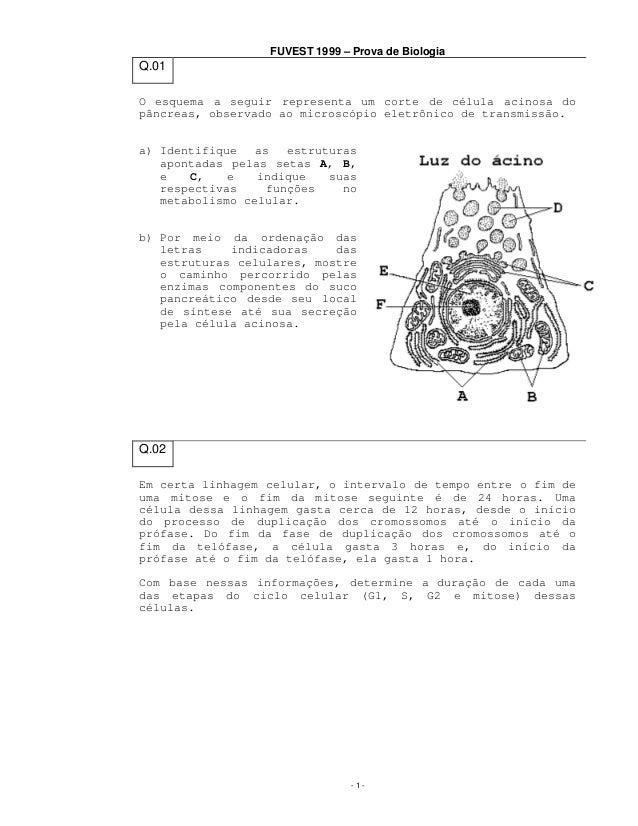 FUVEST 1999 – Prova de Biologia  Q.01 O esquema a seguir representa um corte de célula acinosa do pâncreas, observado ao m...