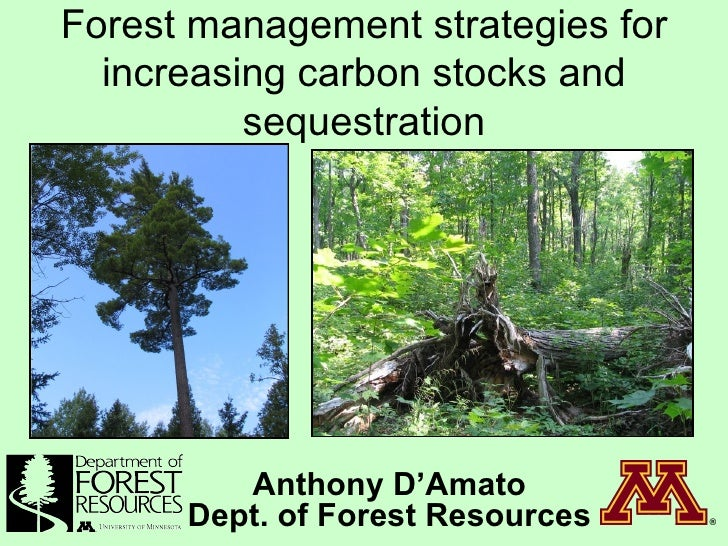 Forest management strategies for increasing carbon stocks and sequestration Anthony D'Amato Dept. of Forest Resources