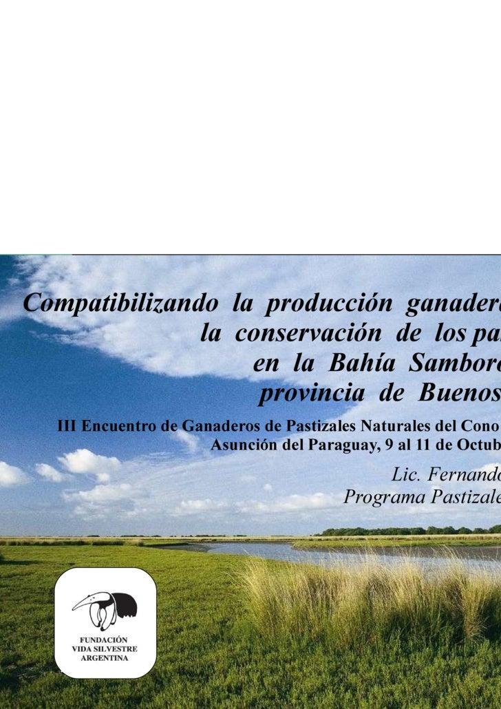 Compatibilizando la producción ganadera con  la conservación de lospastizales en la Bahía Samborombón, provinc...